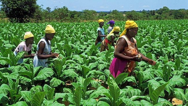 women farmers in Zimbabwe